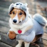 Размеры одежды для собак