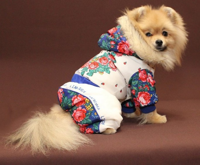 собака в комбинезоне